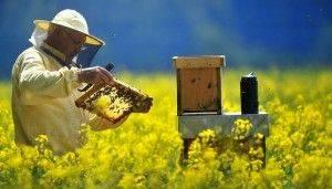 Apicultor con traje de apicultura, en prado de flores amarillas observando cuadro del panal con herramientas de separación cuadros en la mano y ahumador para ahuyentar abejas encima de la colmena