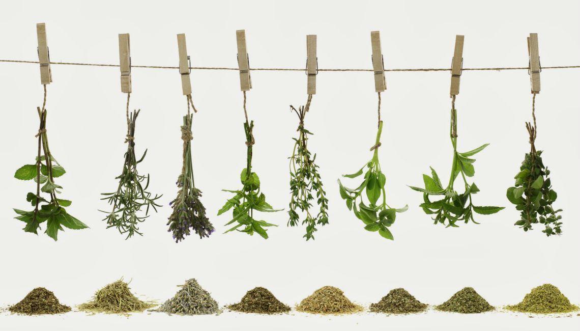 plantas aromáticas y medicinales