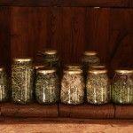 Secado y envasado de plantas medicinales