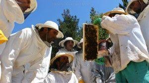 Alumnos en el curso de apicultura en santa eulalia de oscos asturias
