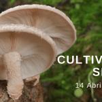 setas shiitake para anunciar un curso de cultivo de setas