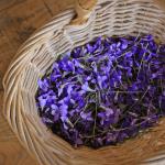 hidroglicerinado de violetas