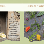 plantas silvestres y champú ecológico